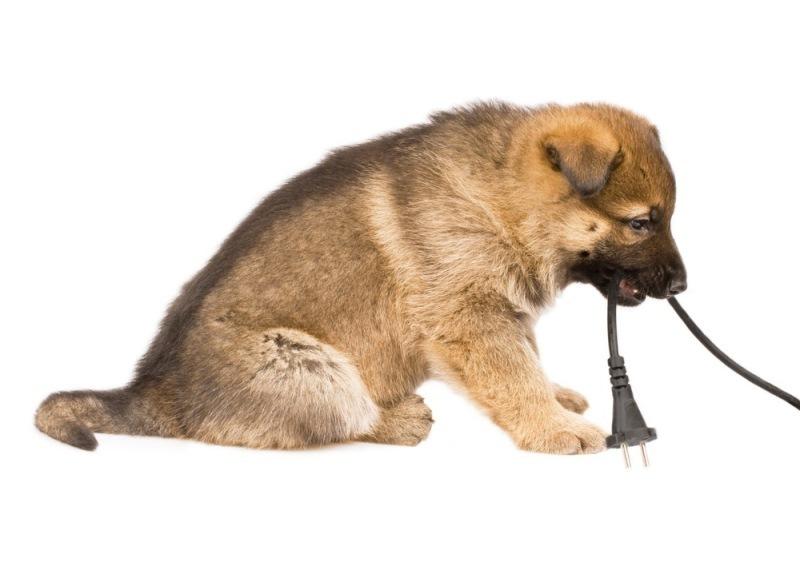 1537d77a73e5 Σκύλος στο σπίτι – τι χρειάζομαι για τη φροντίδα του