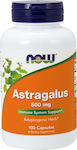 Now Foods Astragalus 500mg 100 κάψουλες