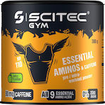 Scitec Nutrition Gym BCAA + Glutamine 300gr Apple